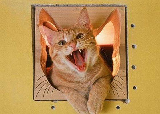 Risultato della ricerca immagini di Google per http://www.virtualfunzone.com/slike/misc/Cat_Friendly_House_Design/Cat_Friendly_House_Design11.jpg