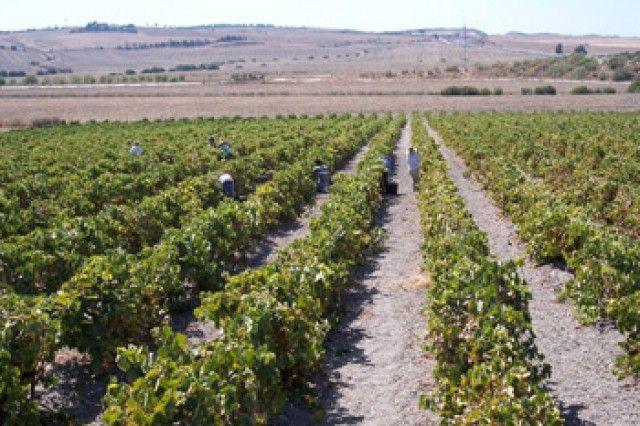 La producción de vino y mosto de la cosecha 2016-2017 se sitúa en 42,5 millones de hectolitros
