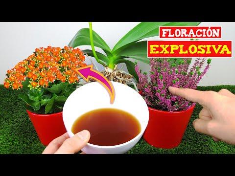 Increíble Floración Con Este Abono Casero De 2 Ingredientes Que Son Desechos De Cocina Youtube Jardinagem Plantas Orquidea