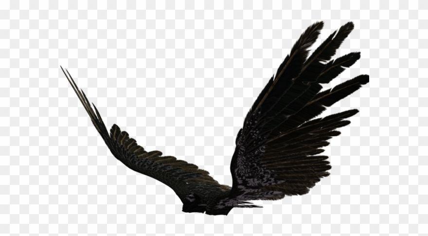 Pin by paullopez on lettering in 2020 dark angel wings