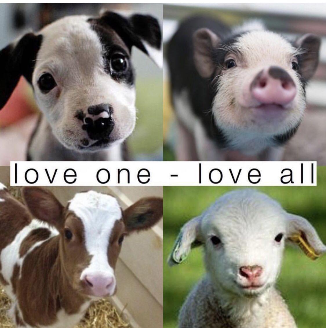#veganquotes