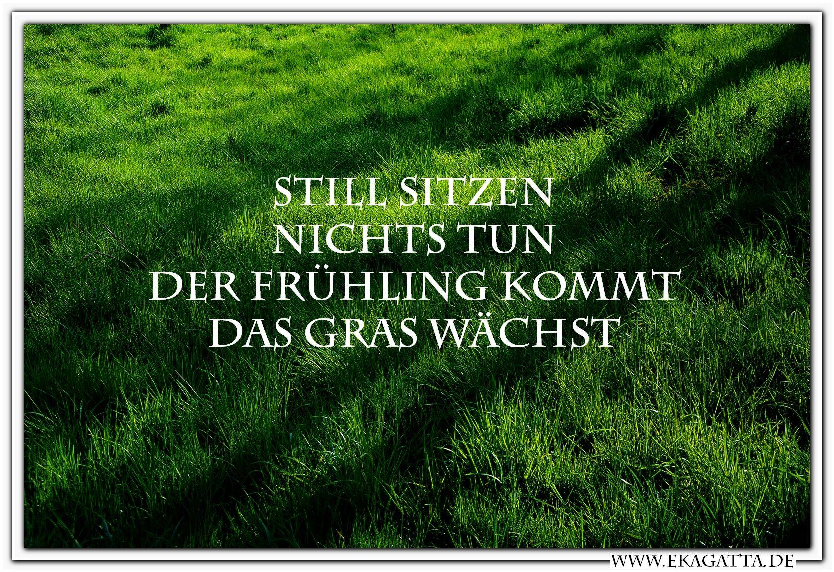 zen sprüche Still sitzen ~ Nichts tun ~ Der Frühling kommt ~ Das Gras wächst  zen sprüche
