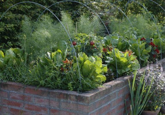 Epic Ein mit Gem sepflanzen und Kr utern bepflanztes Hochbeet das aus Ziegelsteinen gemauert ist