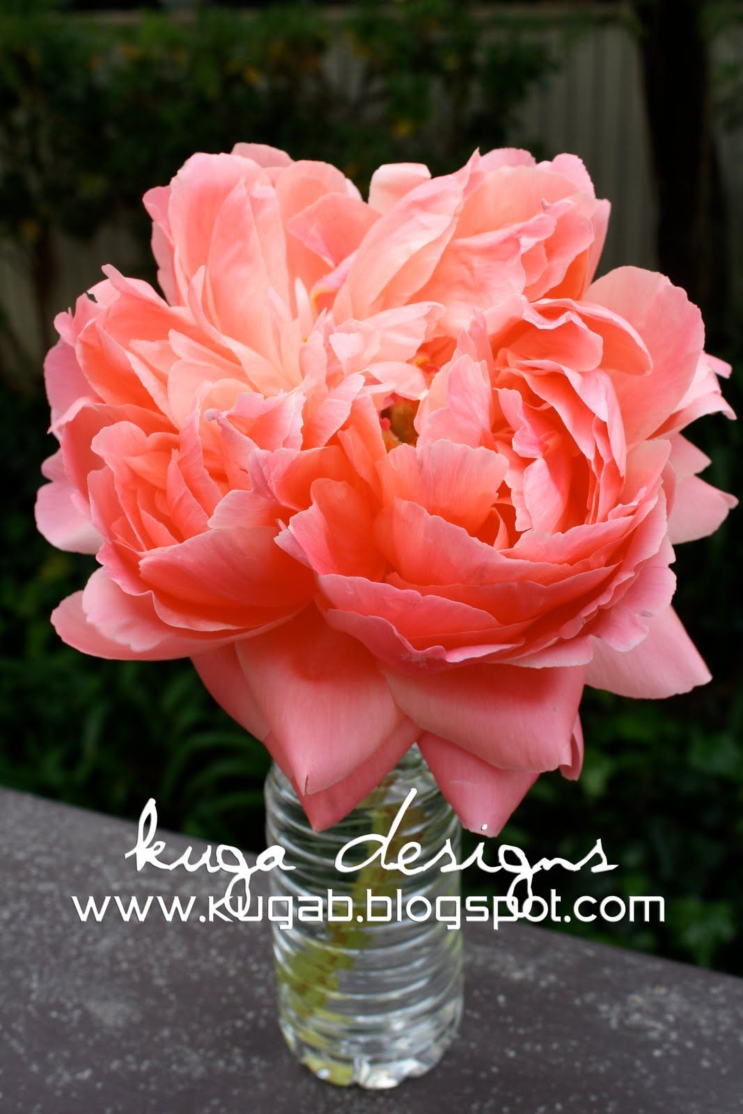 Coral peony that would be an amazing bouquet tas dit oui now coral peony that would be an amazing bouquet izmirmasajfo