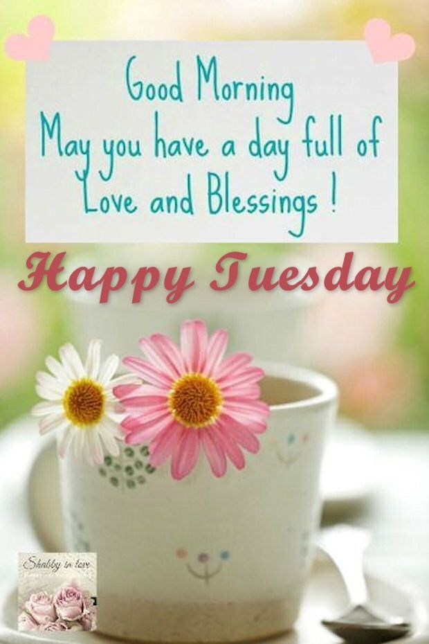 Good Morning Love And Blessings Happy Tuesday Good Morning Good