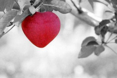 amor-manzana
