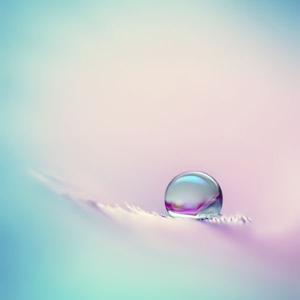 extreme DoF water drop resting at feathers edge. extension tubes, full set  Photograph halcyon by Beauty  on 500px