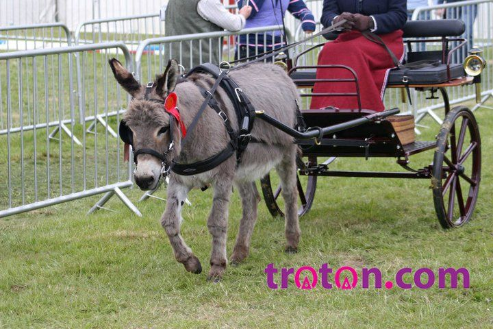 Animals Pulling Wagon : Donkey pulling a cart animals what pull carts
