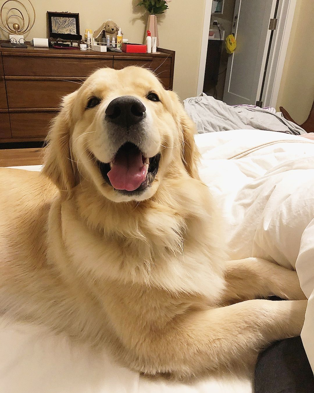 Maui On Instagram My Paws Got Frozen May I Borrow Your Quilt For A Moment To Warm Them Up Politeboy Labrador Retriever Puppies Baby Dogs Cute Dogs