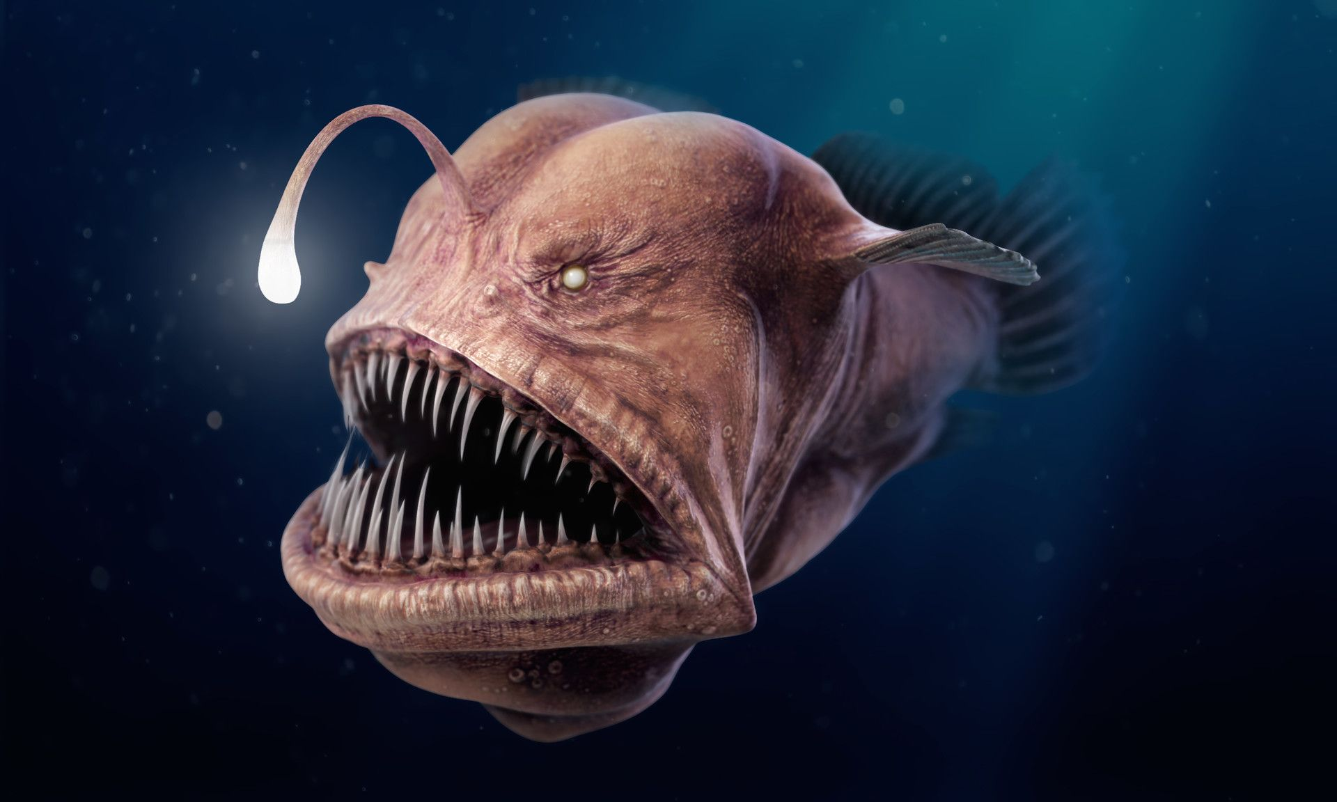 The terrifying Anglerfish !!! Looking like something out of a ...