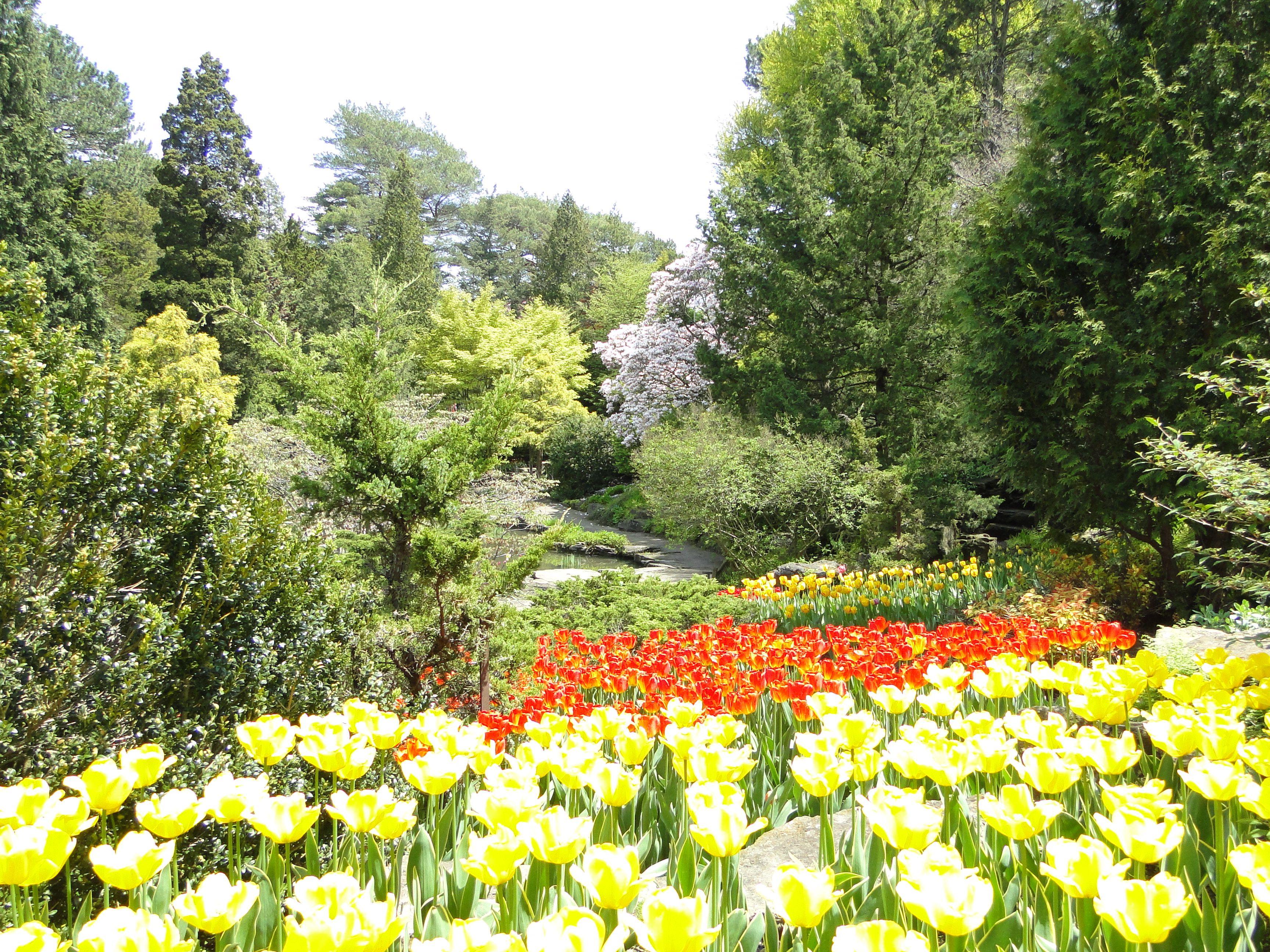 RBG Rock Garden
