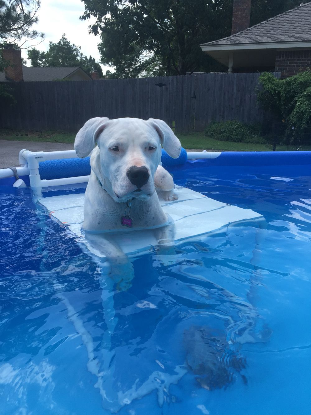 Above Ground Pool Is The Most Efficient Option When It Comes To Building A Pool But Before Start Building And Taking Ca Dog Swimming Pools Dog Pool Pool Decks