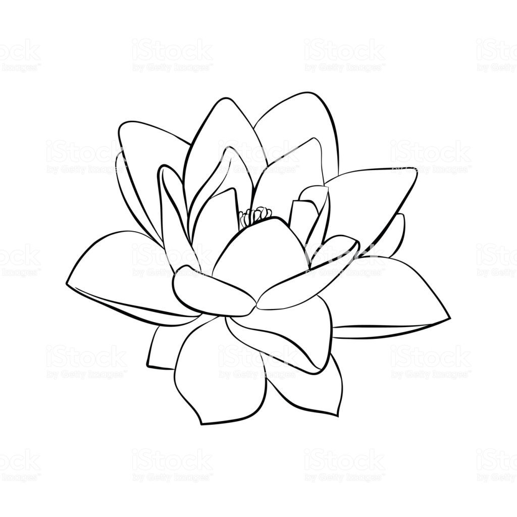 Lotus Flowers Icon The Black Line Drawn On A White Background Lotus Flower Drawing Lotus Flower Art Lilies Drawing