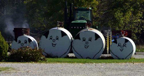 Decorated pigs oil tanks