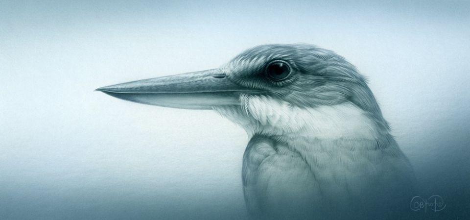 Sacred Kingfisher Study - Christopher Pope