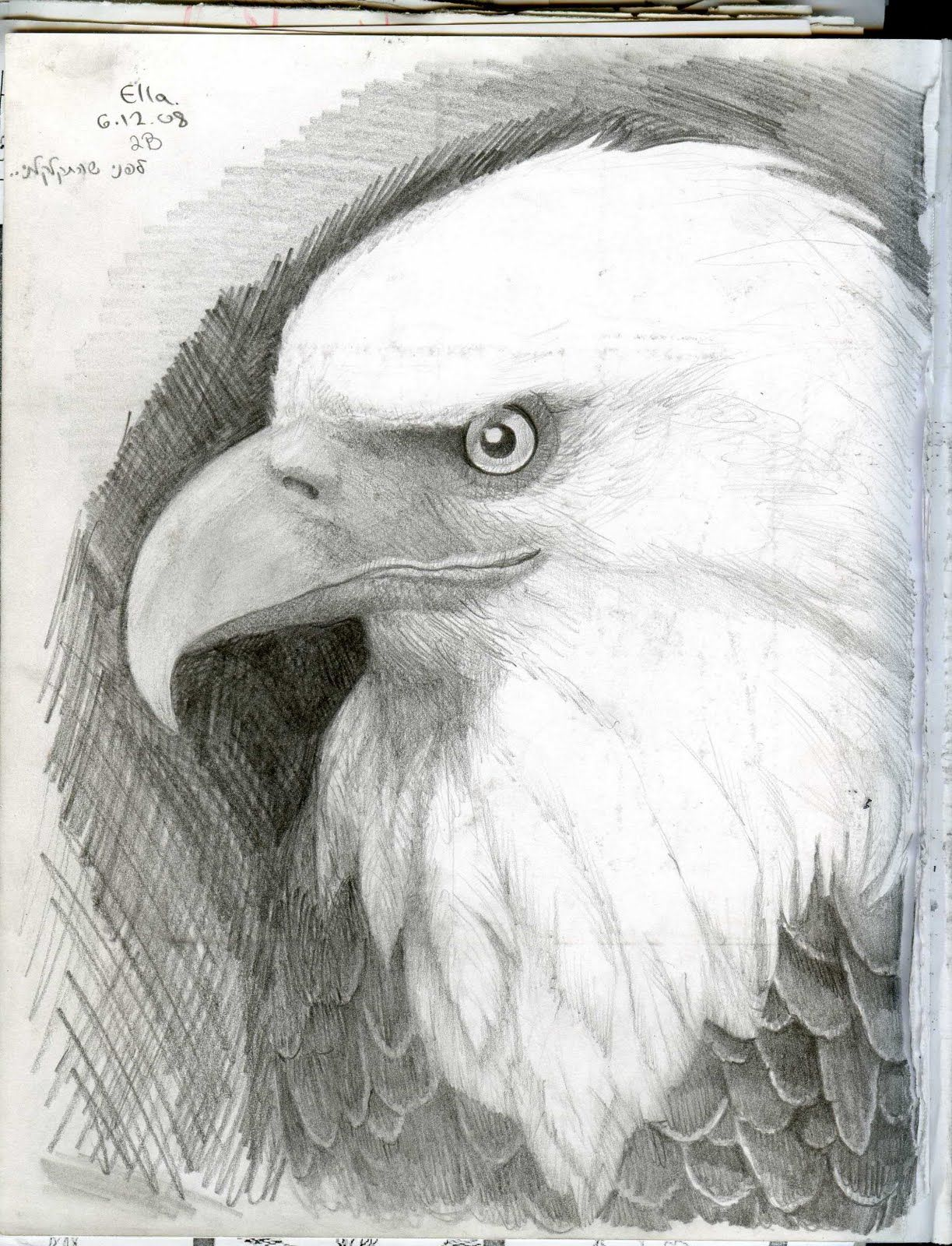 Elegant Eagle Comic Drawings Drawing Pages Eagle Drawings Easy ...