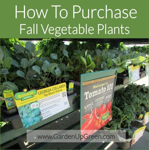 How To Purchase Fall Vegetable Plants