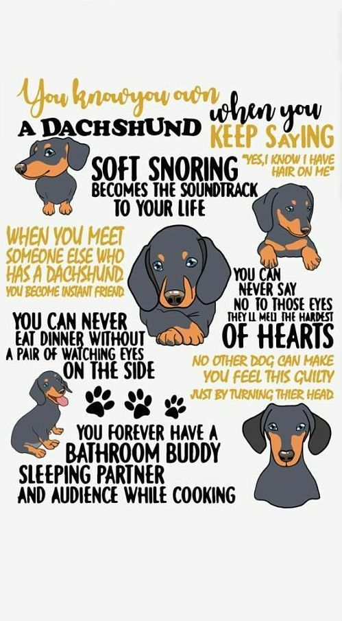 You own a dachshund, or, more likely, they own you ...