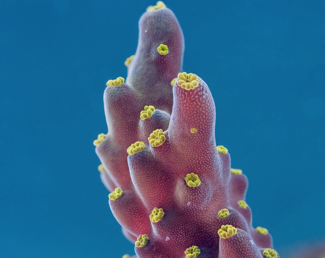 Coral by Daniel Stoupin