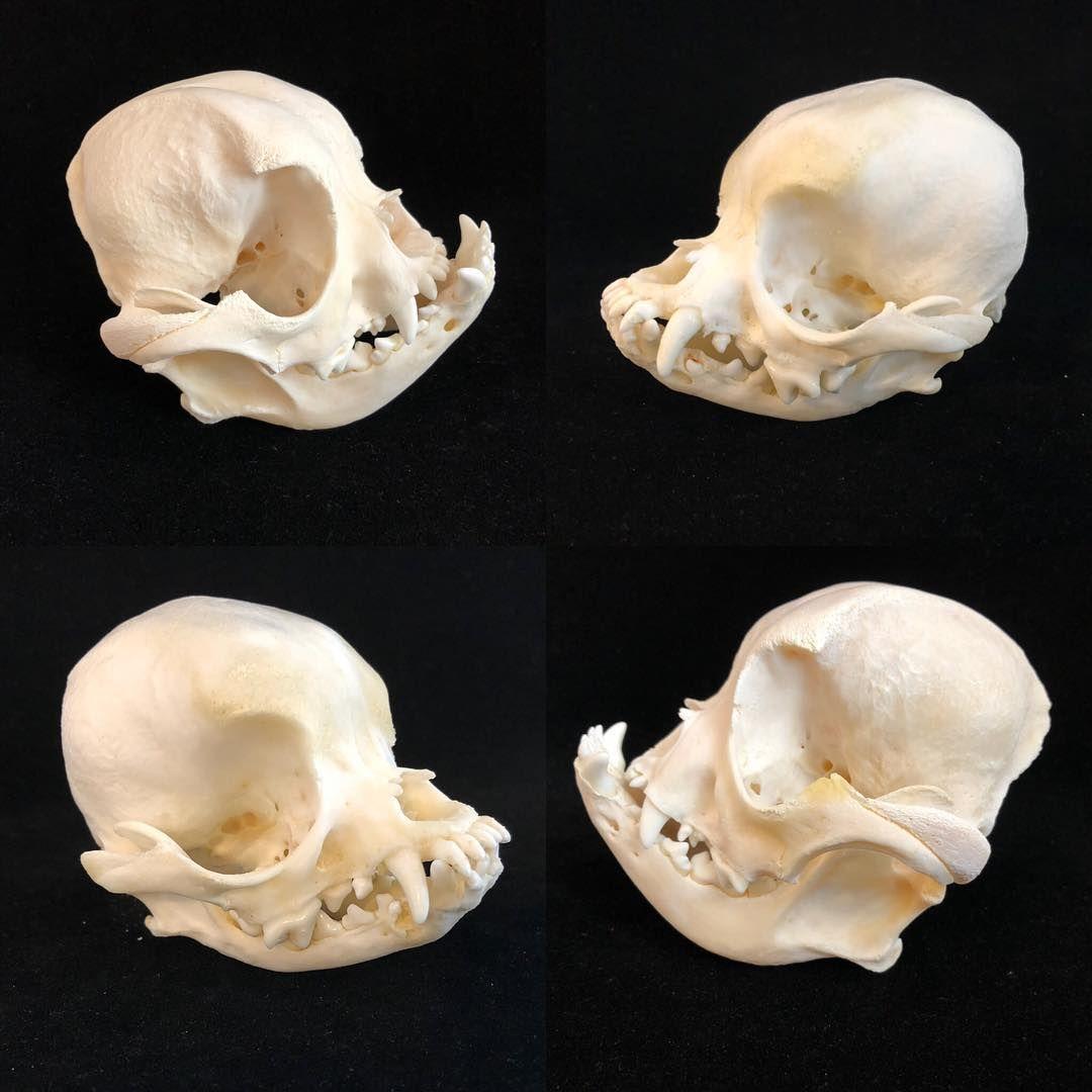 Image Result For Pug Skeleton Pugs Skeleton Stuffed Mushrooms