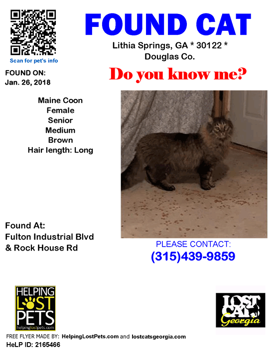 Pin by Lost Cats on Found Cats Found cat, Losing
