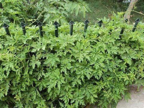 فوائد عشبة العطرة Herbs Youtube Enjoyment