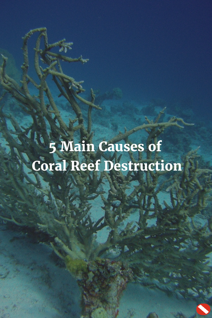 7f8d862e3787 Coral reef destruction is unfortunately common. Make our dive sites (and the  planet) healthier by knowing the 5 main causes.