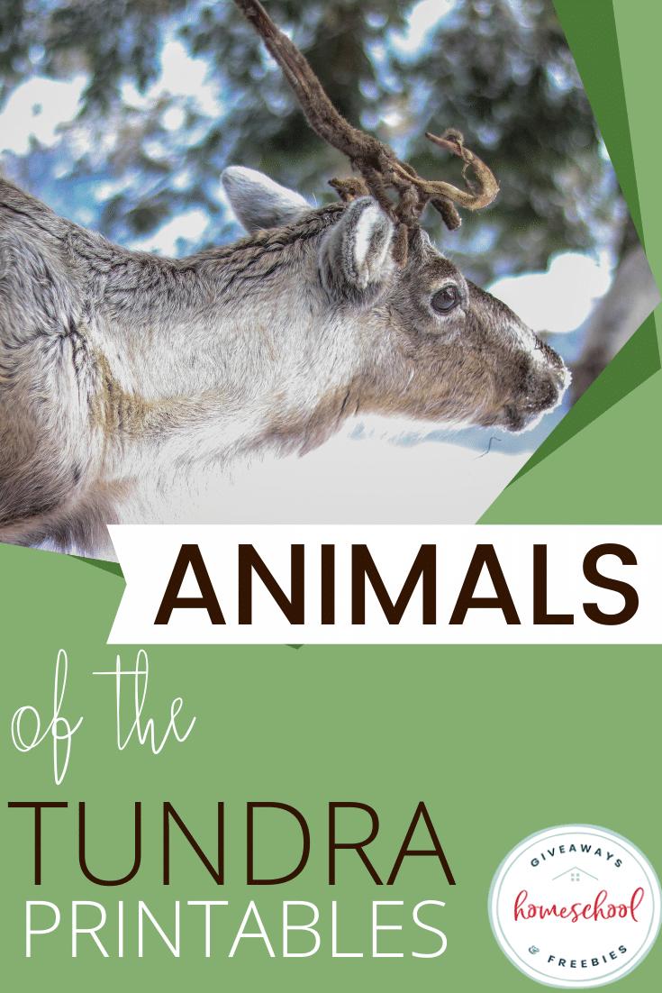 Animals of the Tundra Printables Arctic animals