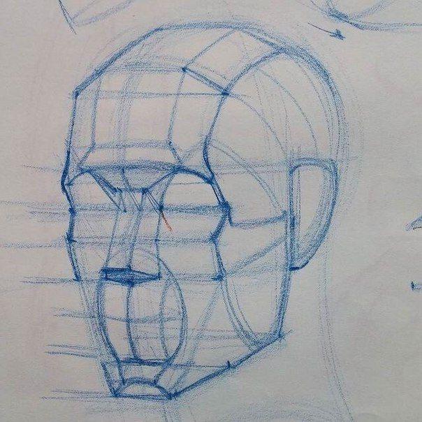 Facial Construction Lines Anatomy Drawing Anatomy Art Anatomy Sketches