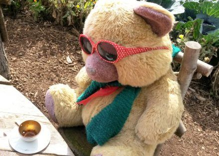 packwood-house-solihull-bear-picnic
