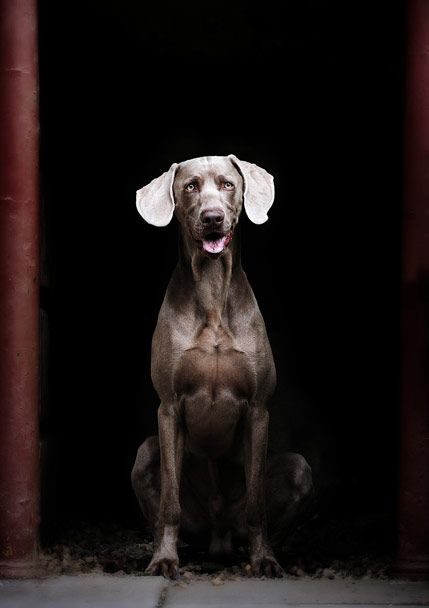 Paws Pet Photography Book by Paul Walker