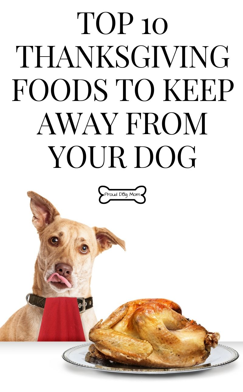 10 Thanksgiving Foods You Should Keep Far Away From Your Dog Dog