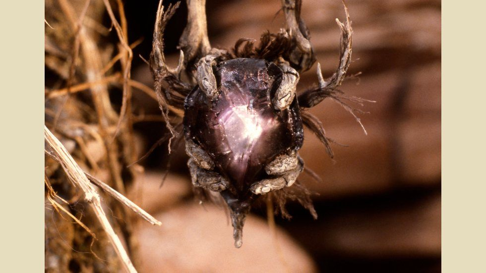 Related image (With images) The dark crystal, Dark
