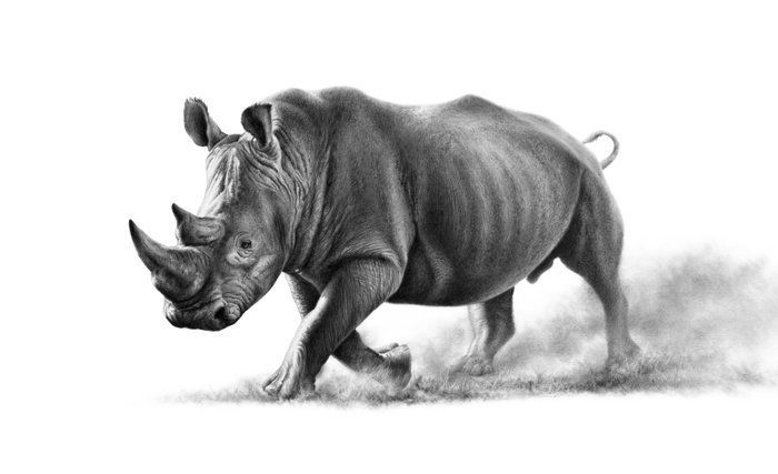 Richard Symonds Wildlfe Artist Wildlife Gallery Artists - Stunning drawings of endangered wild animals by richard symonds