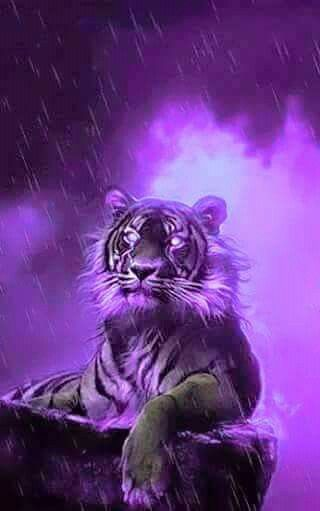 Tiger Purple Neon Tiger Art Animals Beautiful Purple Love