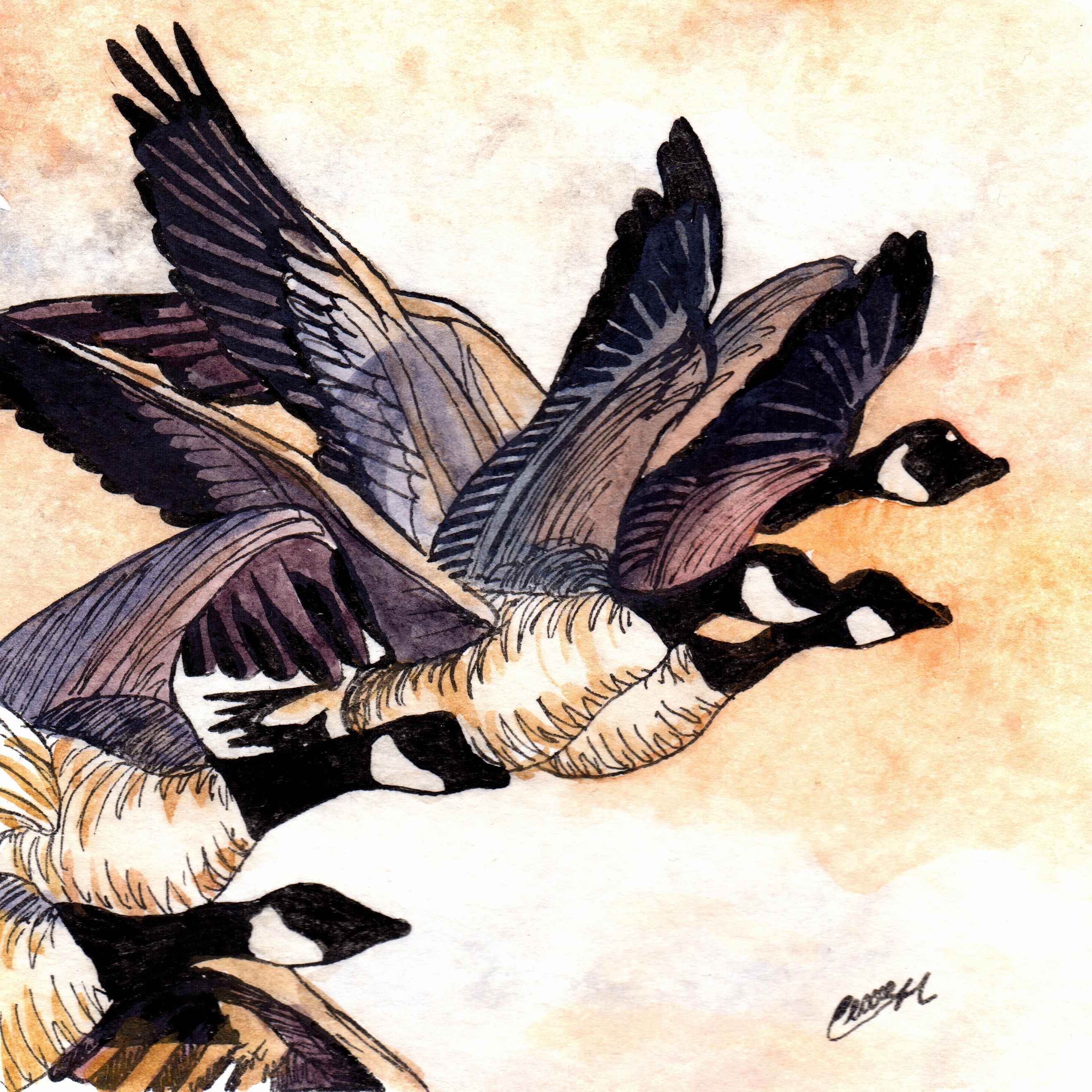 Geese Watercolour Pen Amp Ink In