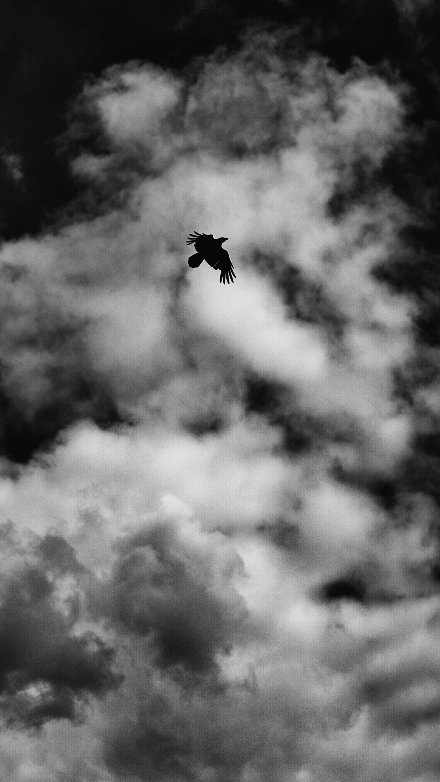 See My Collection Of Great Iphone And Android Bird Wallpapers And Background Images In Ultra High Defini Black Wallpaper Black And White Wallpaper White Iphone