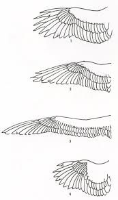 eagle anatomy diagram solid state relay wiring image result for swallow bird art pinterest