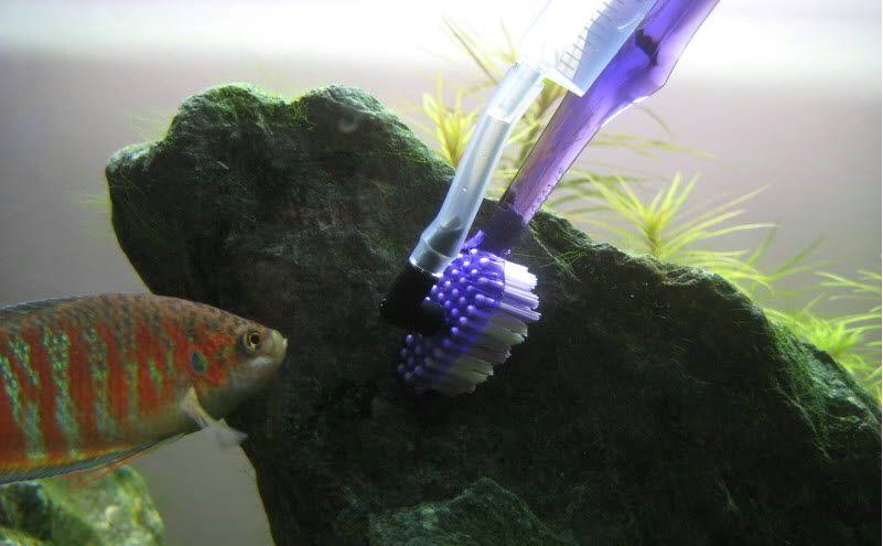 Diy Algae Cleaning Brush Diy Fish Tank Brush Cleaner Fish Tank