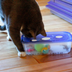 25 best ideas about jouet pour chat on pinterest jeux pour chat jouet chat and jouets de chaton. Black Bedroom Furniture Sets. Home Design Ideas