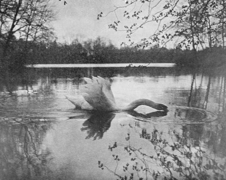 Ferdinand Gebhardt • Gestreckter Schwan, 1911 | C ...