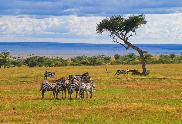Savanna Grassland Biome Facts Youtube