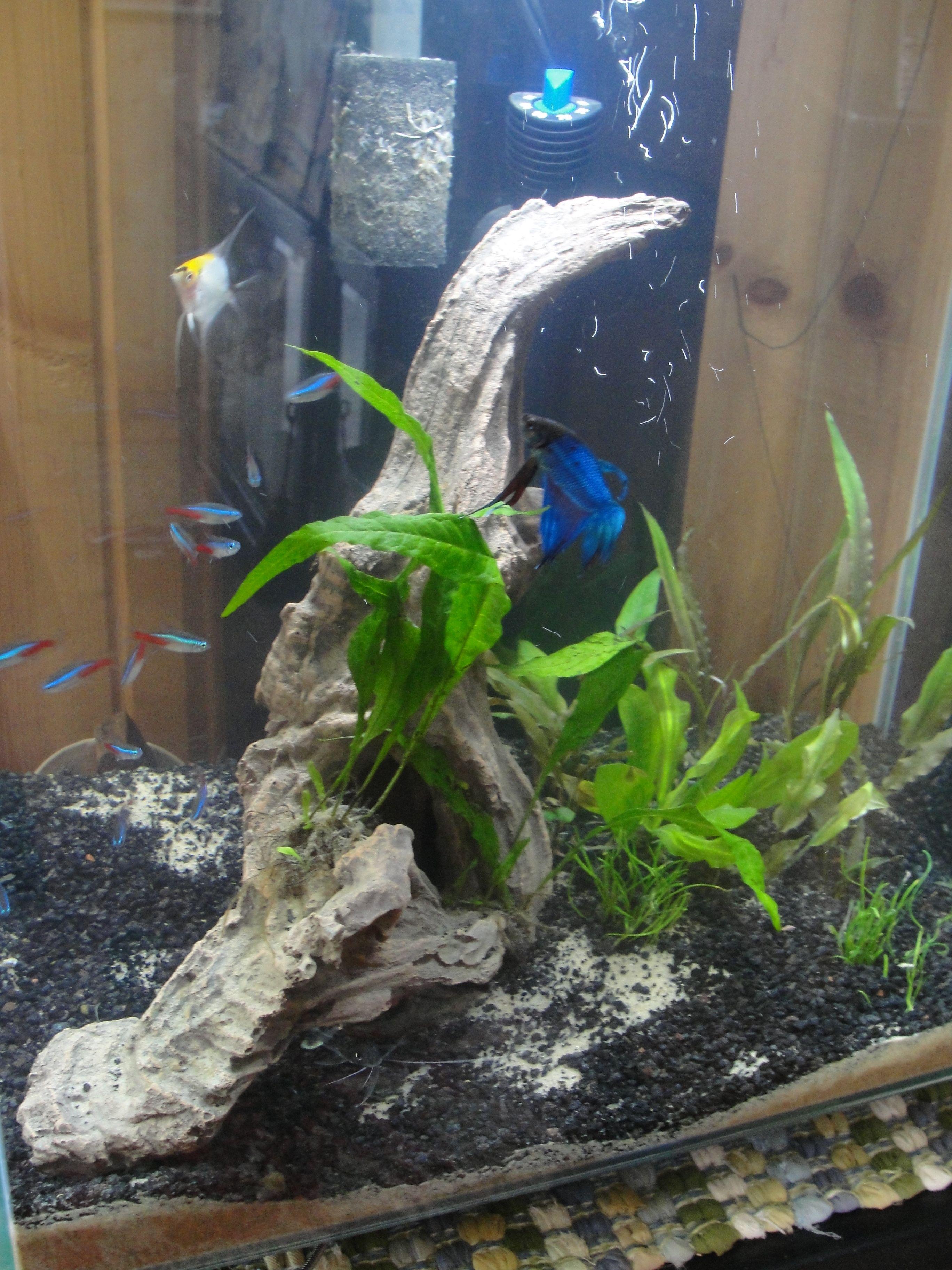 My first aquarium a glass Fluval Edge 12 gallon