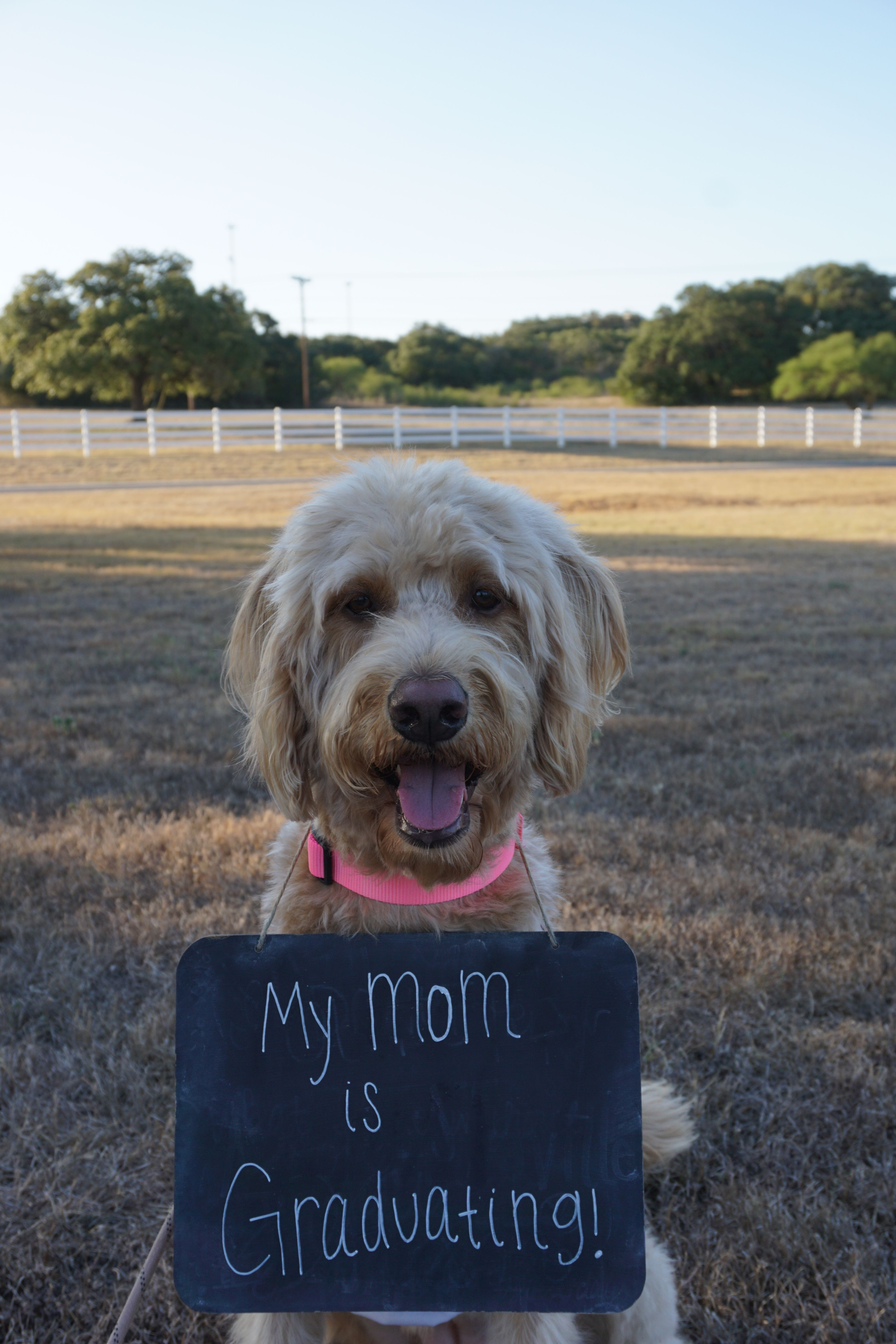 Labradoodle, Graduation, Texas State University, txst, Chalkboard, dogs, mom