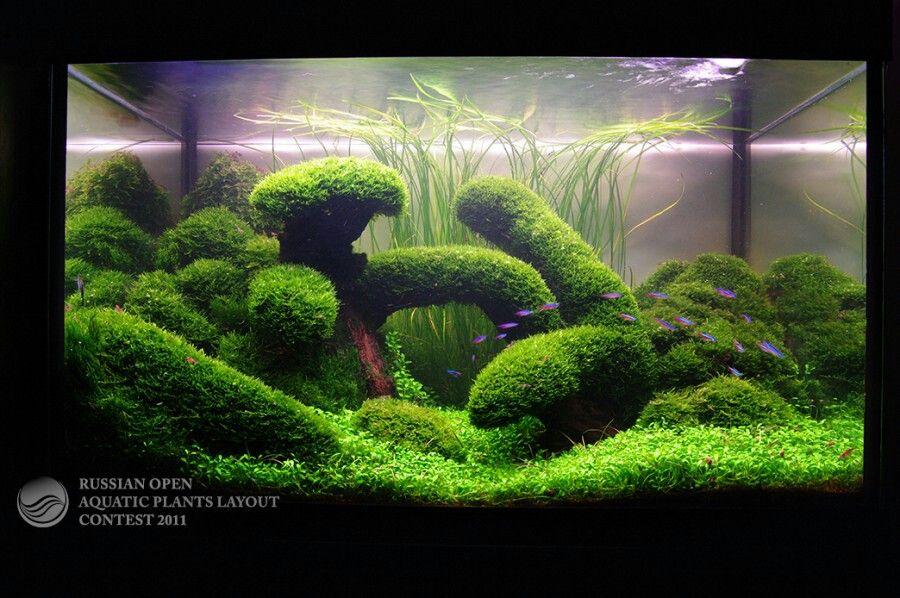 Aquascape With Great Use Of Moss Aquarium Landscape Aquascape Fish Tank Plants