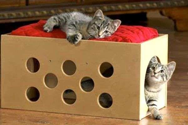 Mobili Per Gatti Fai Da Te : Giochi per i gatti fai da te foto pourfemme micio