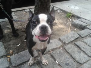 Dogs For Adoption Petfinder Pet Adoption Dog Adoption Cutest