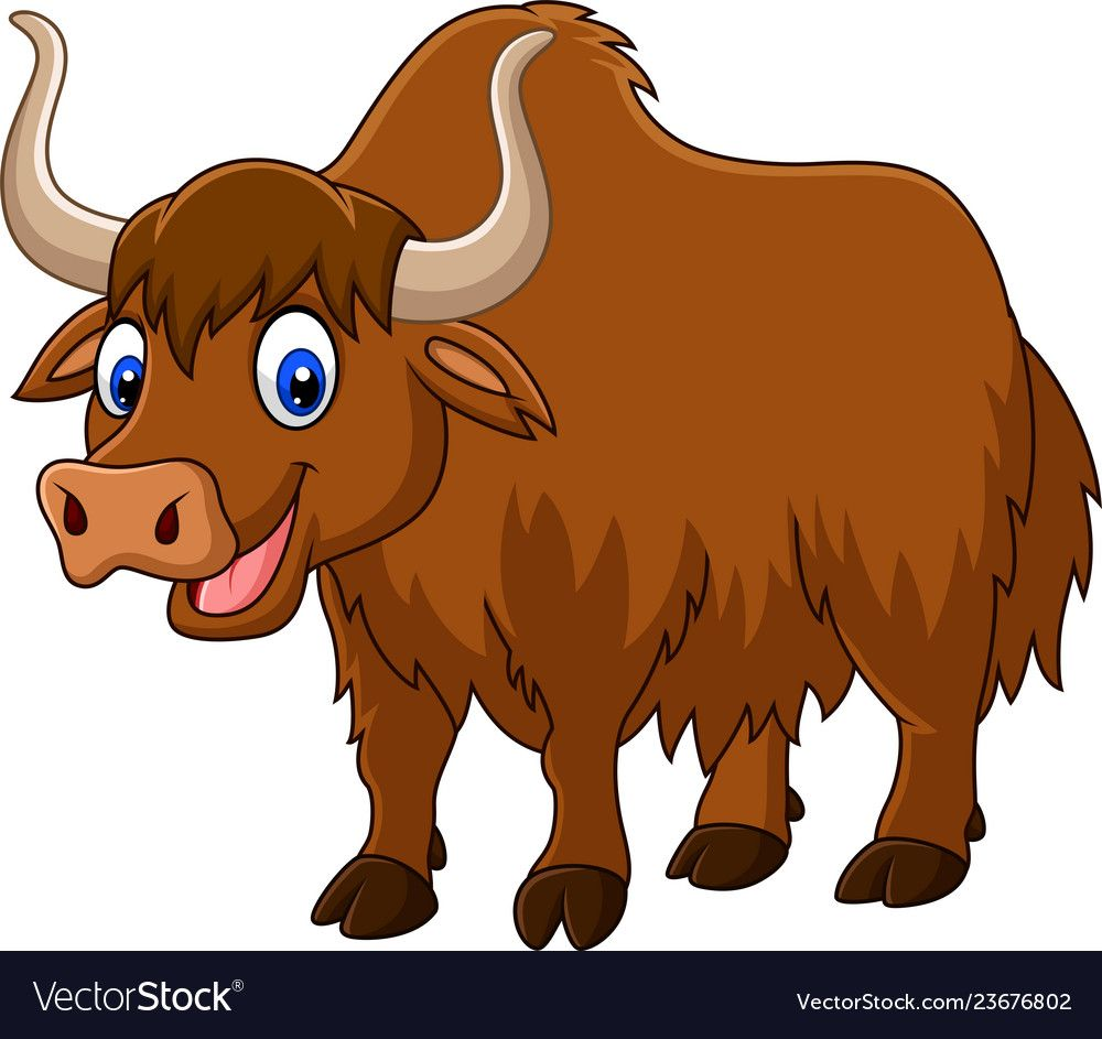 Cartoon Happy Yak Vector Image On Vectorstock Cartoon Drawings
