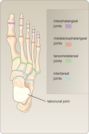 Joints Of The Foot Medical Coding Board Pinterest Medical Coding