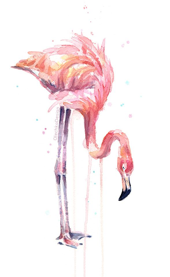 Flamingo watercolor olechka design watercolor drawing for Flamingo feather paint